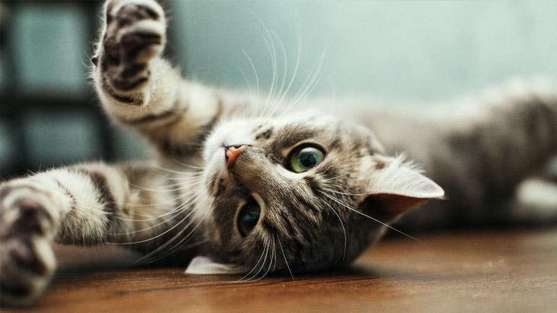 Servizio 4pets dedicato ai tuoi animali domestici